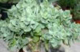 Дерево, живущее в помещении: фото с описанием, особенностями ухода, выращивания и рекомендациями цветоводов