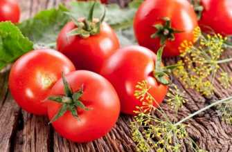 Фитофторастойчивые сорта томатов – 25 лучших!
