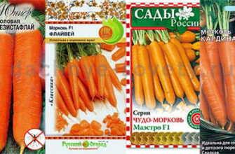 Сорта моркови, устойчивые к морковной мухе – фото, описание, список