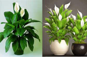 Топ-25 самых неприхотливых комнатных растений | Клуб Флористов
