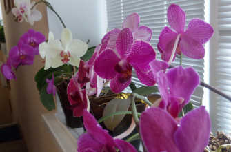 Лучшее удобрение для цветущих орхидей – выбирайте самостоятельно