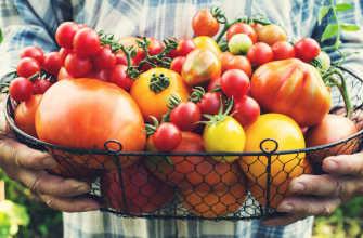 Самые вкусные сорта и гибриды томатов