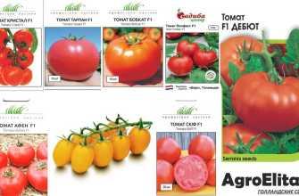 36 голландских сортов томатов: голландский каталог семян