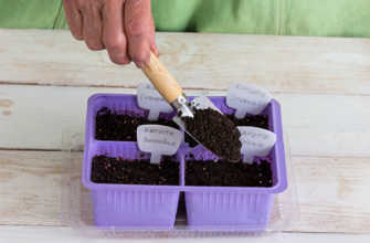 Выращивание кочанной капусты в домашних условиях пошагово с видео фото