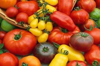 Лучшие сорта томатов для теплицы из поликарбоната, обзор их характеристики