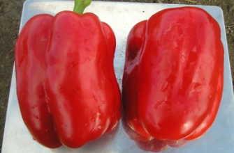 Лучшие сорта перца толстостенного для полевого и тепличного выращивания
