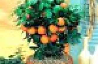Мандариновое дерево в горшке: особенности выращивания в домашних условиях