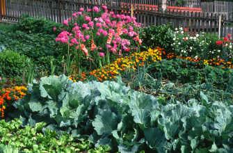 Планировка огорода: как правильно спланировать участок возле дома, посадка плодовых деревьев и кустарников – 13 фото
