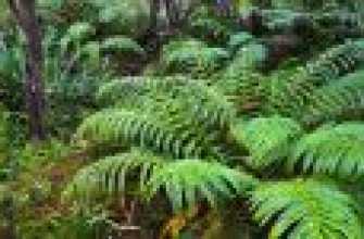 Период вегетации: описание понятия, определение у различных растений, термины
