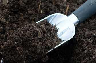 Какая почва лучше для рассады – 5 советов по выбору и подготовке почвы!