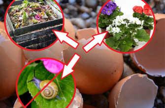 Яичная скорлупа для дачи или огорода – применение