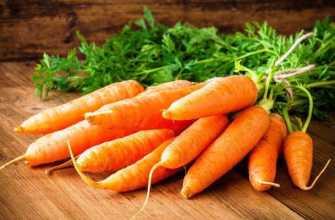 10 лучших сортов моркови – рейтинг 2020