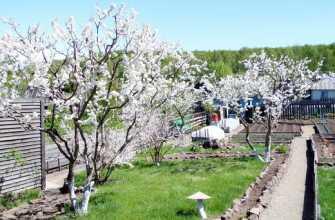 Способы формировать кроны плодовых деревьев, как правильно это делать