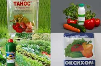 Фунгициды для растений: перечень препаратов, для чего они нужны, их назначение, какие препараты лучше использовать